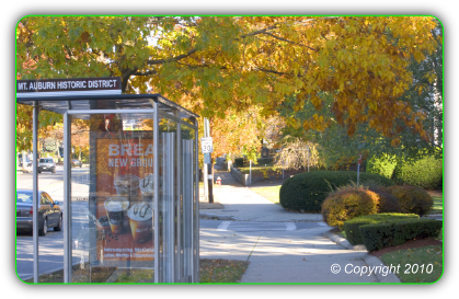 Bus Kiosk on Mount Auburn Street