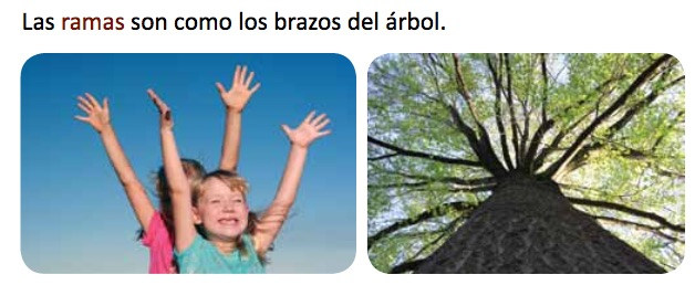 You and a Tree Spanish