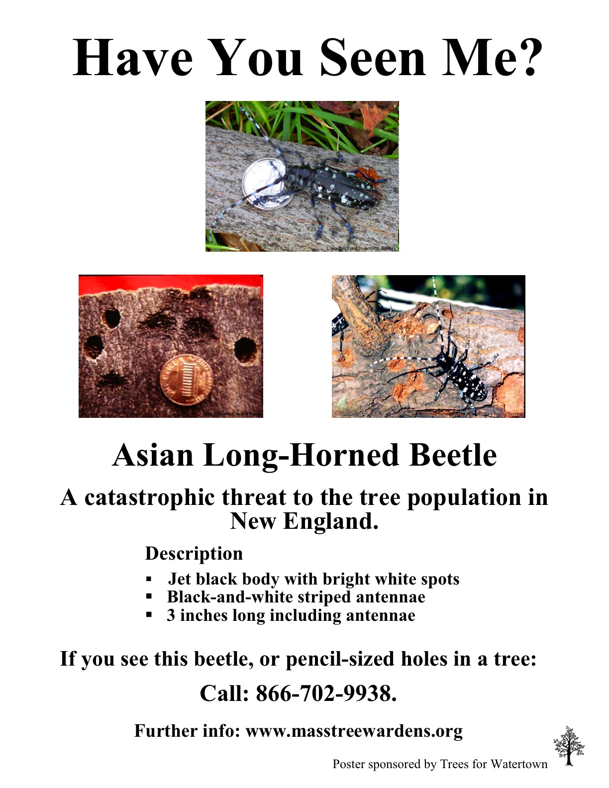 Asian Longhorned  Beetle poster