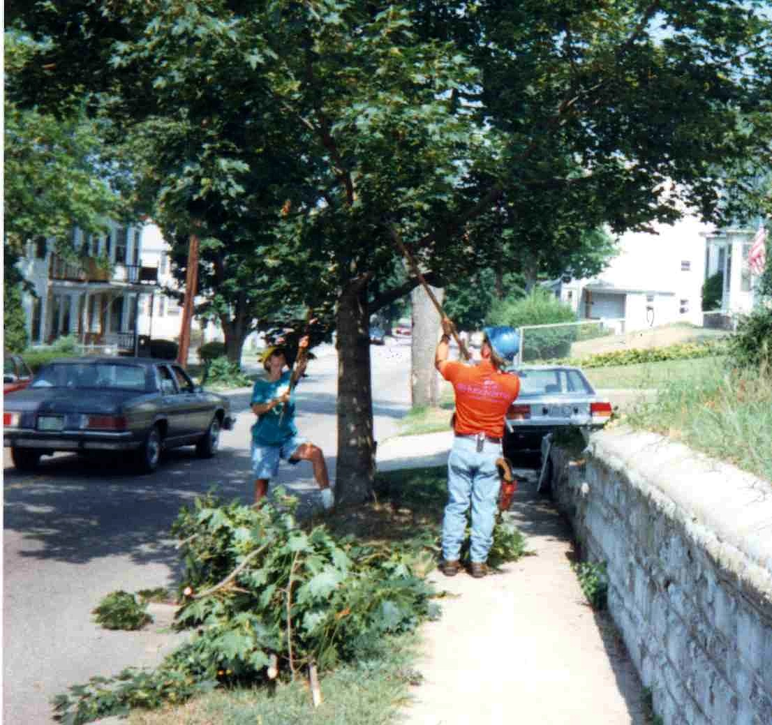Citizens Pruning  Corps