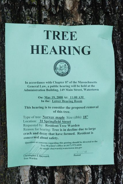 tree hearing sign